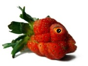 GM-Fish-Strawberry